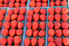Strawberries. Bright red large strawberries in uniform green baskets royalty free stock images