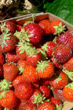 Strawberries. A lot of strawberries in a basket Royalty Free Stock Photo