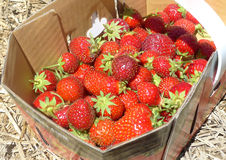 Strawberries. A lot of strawberries in a basket Royalty Free Stock Photography