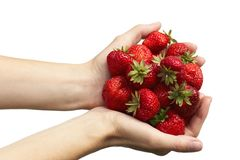 Strawberries. A pair of female hands hold colorful strawberries royalty free stock photo