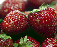 Strawberries. Fresh strawberries stock photography