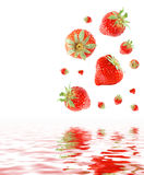 Strawberries. A bunch of strawberries falling in water Royalty Free Stock Image