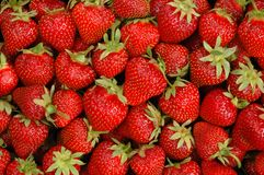 Free Strawberries Royalty Free Stock Photography - 4592247