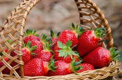 Free Strawberries Stock Photography - 54407382