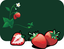Strawberries. Vector color illustration of a strawberries.The vector file is in AI-EPS8 format Stock Photo