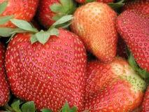 Strawberries. Macro of Louisiana strawberries, fresh from the field Royalty Free Stock Image