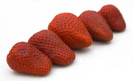 Strawberries. In line royalty free stock photo