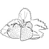 Strawberries. Illustration of three strawberries and leaves in black and white isolated. Also available in color version Royalty Free Stock Image