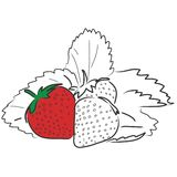 Strawberries. Illustration of three strawberries and leaves. Also available in black backgound and coloring page version Royalty Free Stock Photography