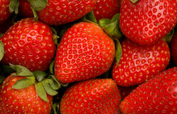 Strawberries. Closeup of bunch of fresh strawberries