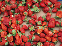 Strawberries. A lot of strawberries at a local stall in the box Stock Photos