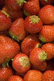 Strawberries. Some fresh strawberries in the sun Royalty Free Stock Image