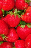 Strawberries. Edge-to-edge shot of bright red strawberry fruit. Shallow depth of field Royalty Free Stock Images