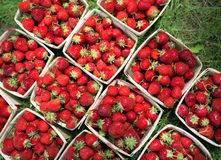 Strawberries on an Angle. These gorgeous ripe strawberries form a beautiful and slightly abstract pattern Stock Image