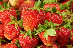 Strawberries  background closeup Stock Photography