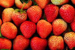 Strawberries. Background from freshly harvested strawberries Stock Image