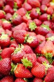Strawberries background fruits focus on foreground Royalty Free Stock Images