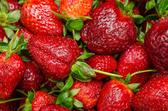 Strawberries Background Stock Photos