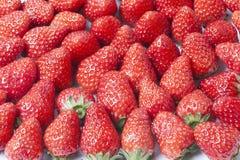 The strawberries Stock Image