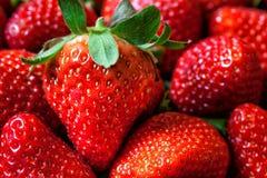 Strawberries background pile macro Royalty Free Stock Photo