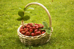 Strawberries in basket Royalty Free Stock Images