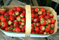 Strawberries in a basket. Red juicy strawberries with stems in a basket Stock Image