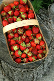 Strawberries in a basket. Red juicy strawberries in a basket with a handle Royalty Free Stock Photo