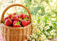 Strawberries in a basket and a bouquet of of chamomiles Stock Image