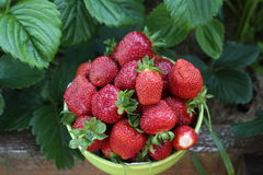 Strawberries. A basket of bright juicy strawberries stock photos