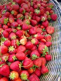 Strawberries in a basket at farmers market. Organic fresh summer food background colorful red fruit healthy Stock Images