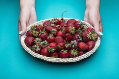 Strawberries in a basket. Female hands. stock photos