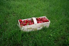 Strawberries in a basket. Fresh strawberries in a wooden basket on the background of grass royalty free stock photo