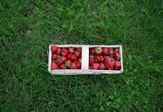 Strawberries in a basket. Fresh strawberries in a wooden basket on the grass Stock Image