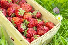 Strawberries in a basket on grass Royalty Free Stock Photos