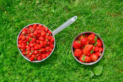 Strawberries. In baskets on green grass in summer Royalty Free Stock Photo
