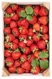 Strawberries berry fruits harvest in wooden box from above Stock Photos