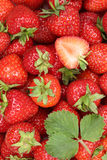 Strawberries berry fruits with leaves background Royalty Free Stock Photos