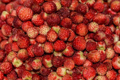 Strawberries berry wild bunch Stock Photography
