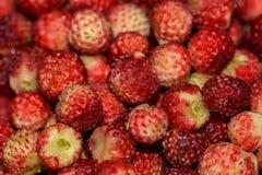 Strawberries berry wild bunch Stock Photo