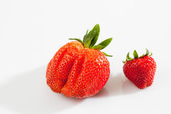 Strawberries, big and small Royalty Free Stock Images