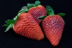 Strawberries on black background. Three Strawberries on black background Stock Images