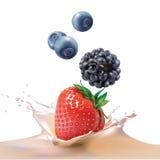 Strawberries, blackberries, blueberries falling into milk. Beautiful strawberries, blackberries, blueberries falling into milk. Realistic illustration. Vector Stock Images