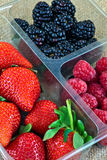 Strawberries, Blackberries and Raspberries. Red raspberries, blackberries and strawberries in a plastic container Royalty Free Stock Image
