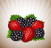 Strawberries and blackberry with leaves Stock Photos
