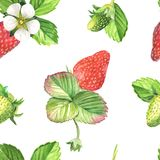Strawberries bloom watercolor seamless pattern. Hand drawn realistic leaves, berries and flowers on white background Stock Photo