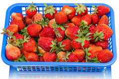Strawberries in a blue container Stock Images