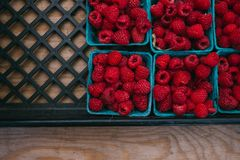 Strawberries on Blue Square Container Royalty Free Stock Images