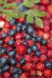 Strawberries and blueberries. Strawberries and blackberries close-up stock photo