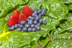 Strawberries, Blueberries, Chard. Stock Images