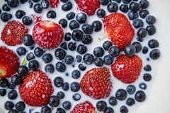 Strawberries, blueberries and milk in a white bowl Stock Photography